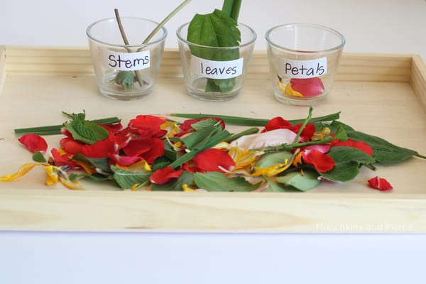 sorting flower parts - science for kids