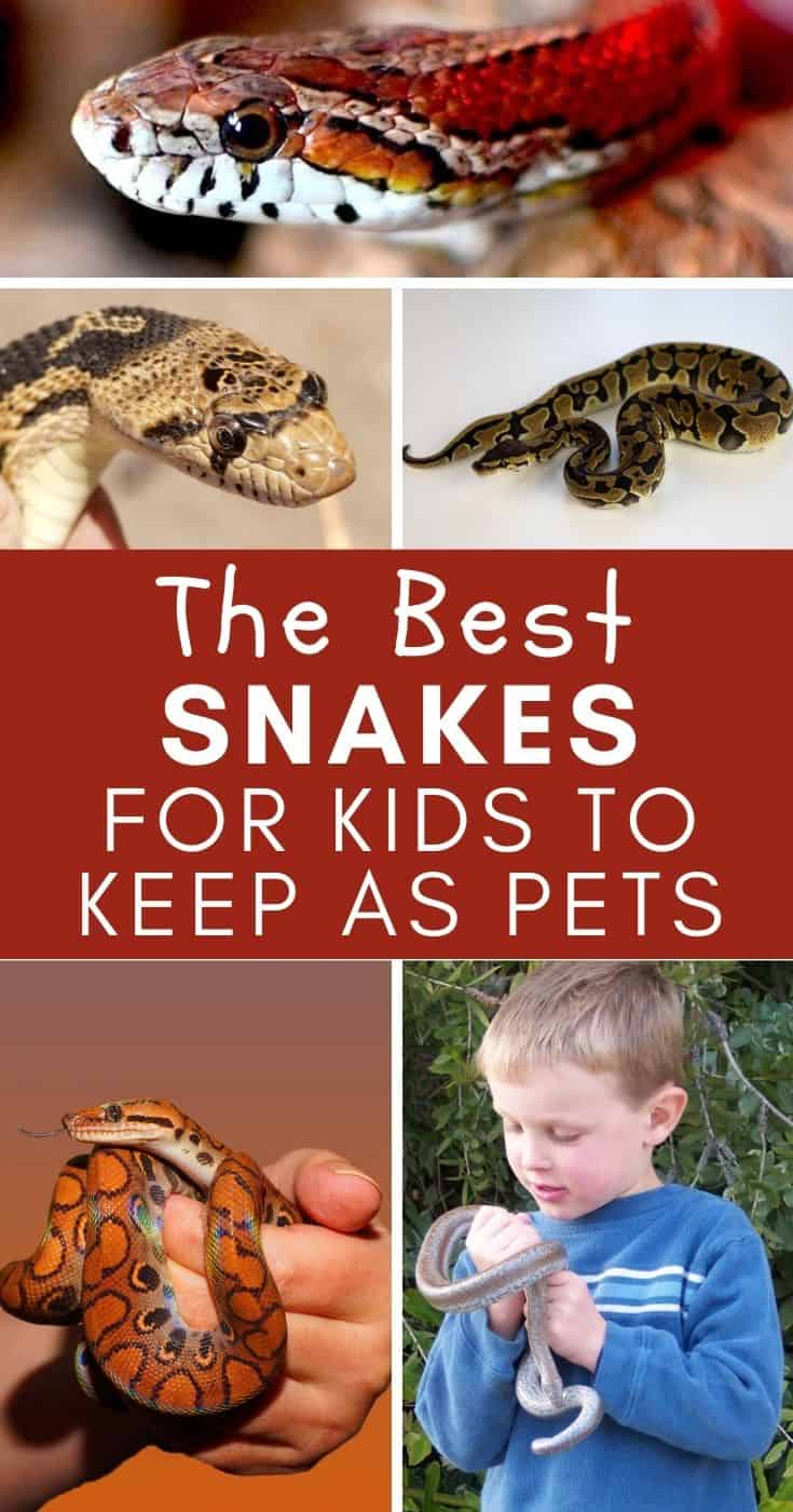 Best Snakes for Kids: If you're interested in getting a snake as a pet for your kids, here's everything you need to know!